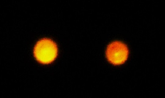 ARTICLE TWO ORANGE ORBS 511
