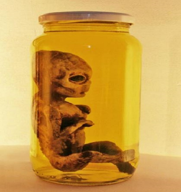 ARTICLE  ALIEN IN JAR